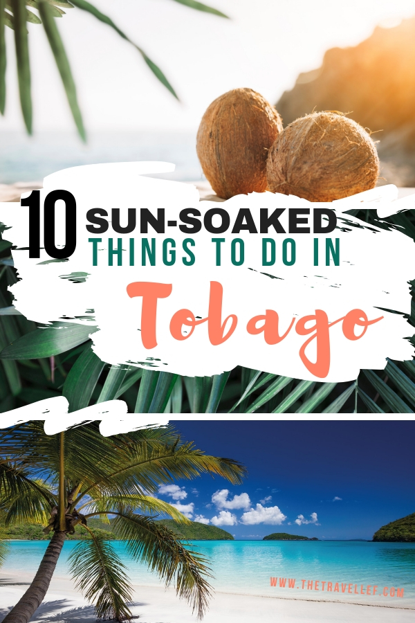 Looking for a Caribbean vacation? Tobago is the perfect island for that. Discover the best things to do in Tobago, the best beaches to visit and epic nature to explore in this Caribbean island. #Tobago #Caribbean #travel