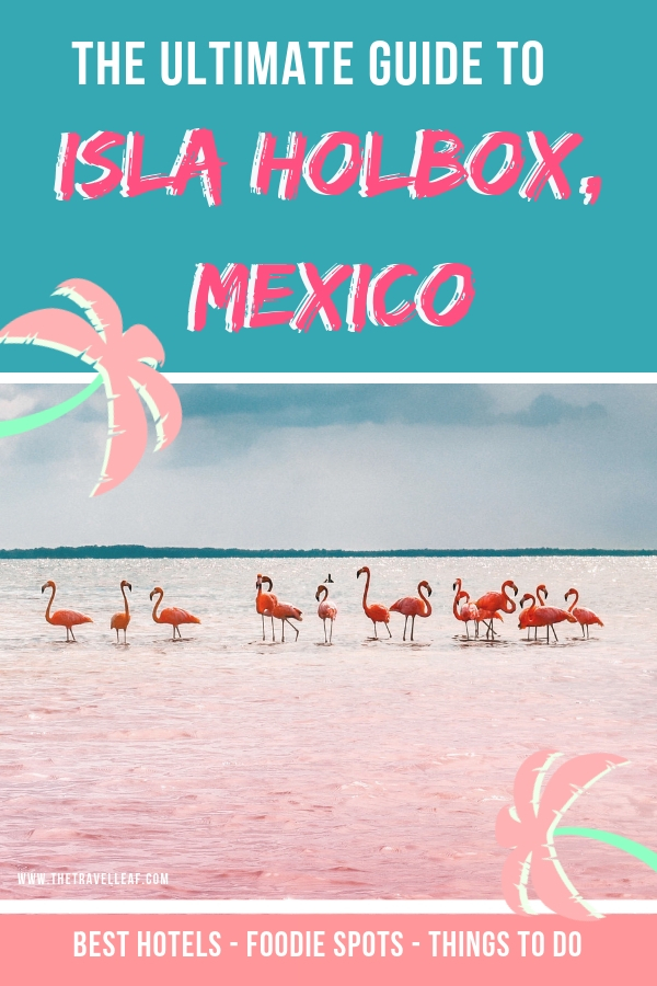 Do you like the idea of randomly meeting flamingos in their natural habitat on a secluded beach? In that case, Isla Holbox Mexico is where you should be to experience that. Here's our Ultimate Guide to Isla Holbox, Mexico that includes info about the best beach locations, dreamy hotels, cool things to do and delicious restaurants and street food spots. And where to find flamingos of course! #mexico #islaholbox #cancun #travel